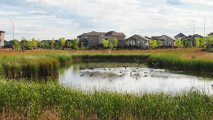 Housing and wetland2